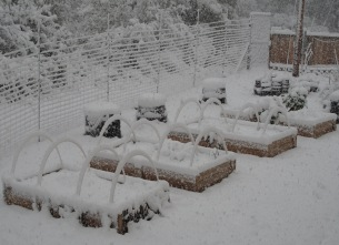 Snow Covered Vegetable Beds