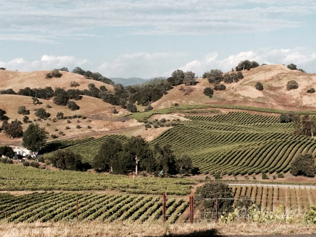 Vineyards 5-9-15-3